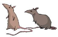 pl_pirateradio_rats