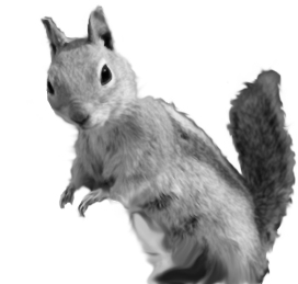 squirrels learning